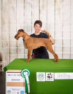 Crufts Prize Winner Twenty of Tara